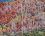 Mountainside, Red Oak & Aspen