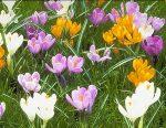 Цветущие сады – Весна в Москве: где гулять с фотоаппаратом?